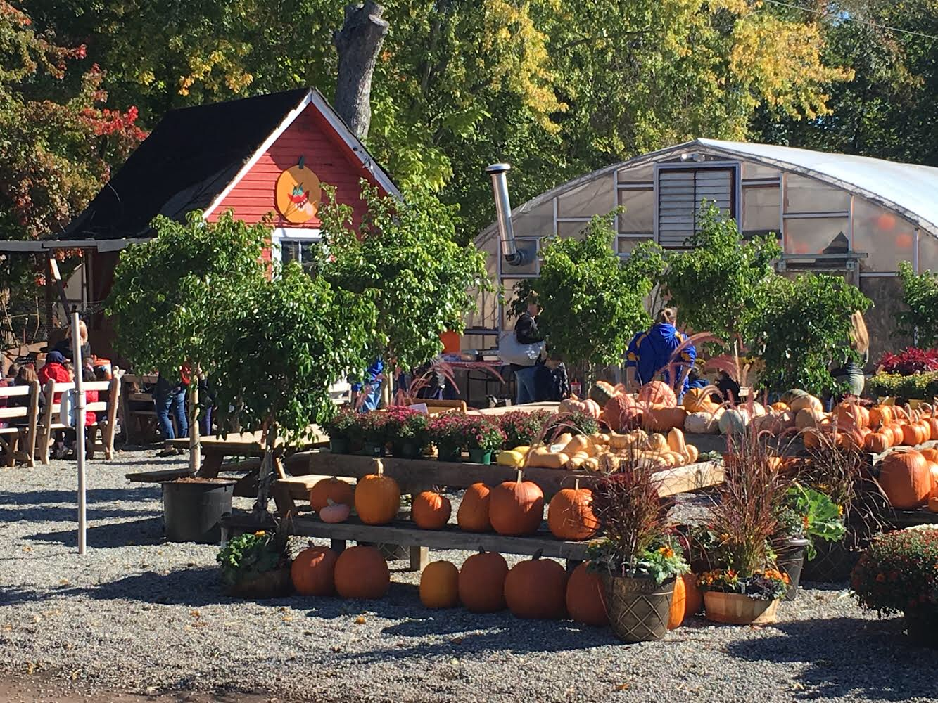 Mums, Pumpkins, Gourds, Deer Resistant Plants, and SO much more! Stop on down!